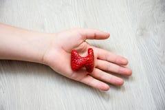 In palm van hand die op houten vloer liggen, is anatomisch model van schildklier Conceptenfoto die schildklierziekte zoals cance  stock fotografie