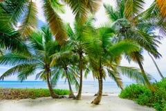 Palm van het paradijs de tropische strand de Caraïbische Zee Stock Foto