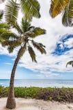 Palm van het paradijs de tropische strand de Caraïbische Zee Royalty-vrije Stock Afbeelding