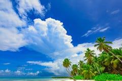 Palm van het paradijs de tropische strand de Caraïbische Zee Stock Afbeeldingen