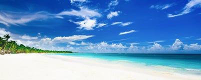 Palm van het paradijs de tropische strand de Caraïbische Zee Royalty-vrije Stock Foto's