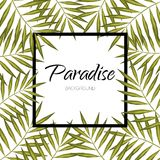 Paradise vector leaves. Palm tree banner. Exotic aloha frame background. Palm vector tree banner. Exotic leaves background. Leaf frame Stock Photography
