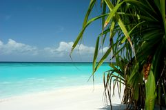 Palm view. Lovely beach with plants Stock Photo