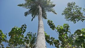 Palm View Tropic Nature Vacation. Footage of a palm tree shown from the bottom to the top stock video