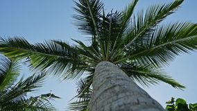 Palm View Underneath 4k. Footage of a palm tree seen from underneath. Shot in 4k stock video footage