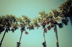 Palm Vintage tree Retro Royalty Free Stock Images