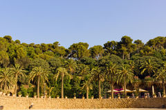 Palm in the wall park Guell Royalty Free Stock Photography