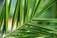 Palm with water drops Stock Images