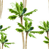 Palm watercolor seamless pattern Stock Images