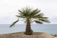 Palm waterfront Royalty Free Stock Photo