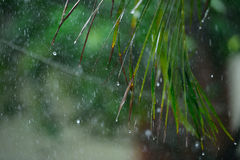 Palm wet leaves Royalty Free Stock Images