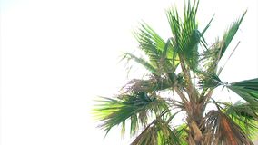 Palm White Background. Video of Palm White Background stock footage