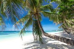 Palm on white beach, Boracay island Stock Image