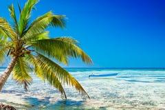 Palm on white sand beach near cyan ocean. Under blue sky stock photos