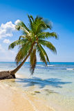 Palm on white sand beach near cyan ocean. Under blue sky stock images