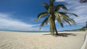 Palm on white sand beach. Ocean shore stock video footage