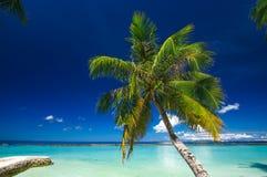 Palm at white sand beach on tropical paradise Maldives island Stock Image