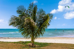 Palm, white sand, sea and grass Stock Image