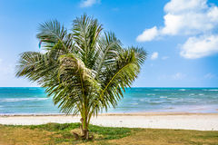 Palm, white sand, sea and grass Royalty Free Stock Photography