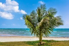 Palm, white sand, sea and grass Royalty Free Stock Image