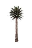 Palm on white Stock Photo