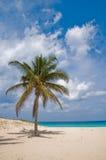 Palm in Wind on a Sandy Beach Stock Photos