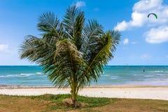 Palm, wit zand, overzees en gras Stock Afbeelding