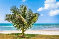 Palm, wit zand, overzees en gras Royalty-vrije Stock Fotografie