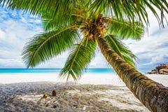 Palm, wit zand, turkoois water bij tropisch strand, paradijs in Seychellen 5 stock fotografie