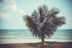 Palm, zand, overzees en gras onder hemel Royalty-vrije Stock Foto
