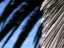 Palm3. Landscape photo of dried palm frond royalty free stock photography
