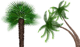 Palma-árboles Fotografía de archivo libre de regalías