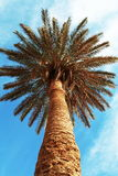 Palma-árvore fotos de stock