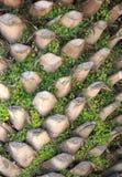 Palma-árvore. Textura Foto de Stock Royalty Free