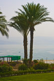 Palma-árvores Imagem de Stock