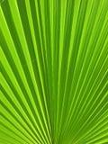Palma óptica Imagen de archivo