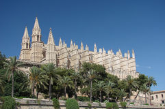 palma καθεδρικών ναών στοκ εικόνα