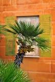 Palma на фоне изображения на стене Стоковое Изображение RF