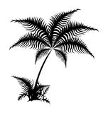 Palma. Black palm made vectors. Are grouped stock illustration