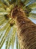 Palma Immagini Stock