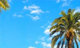 Palma Stock Photos