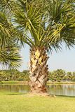 palma Foto de Stock