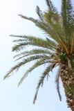palma Royaltyfri Fotografi