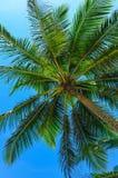 palma Fotografia Stock Libera da Diritti