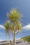 palma Imagem de Stock