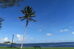 palma Imagens de Stock