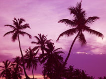 Palma Imagens de Stock Royalty Free