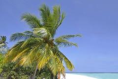 Palma Royalty-vrije Stock Afbeelding