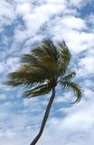 Palma Imagen de archivo libre de regalías