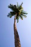 palma obrazy royalty free